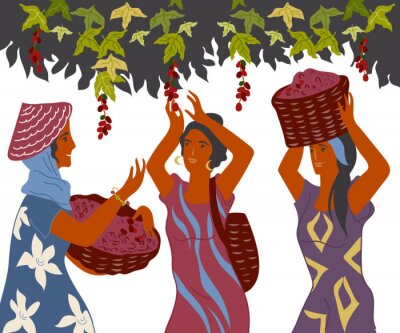 Quadro Women with basket pick coffee beans from the bush on plantation, image for cafe and packaging. Coffee harvest gatherers in work flat cartoon vector illustration isolated on white background.