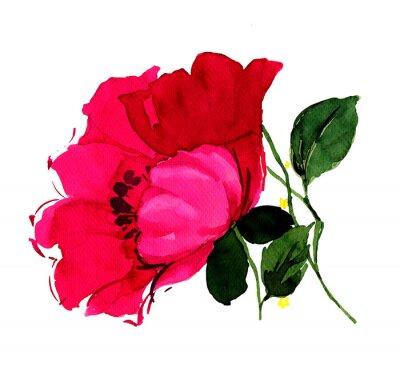 Quadro 아름다운 진홍 의 양귀비