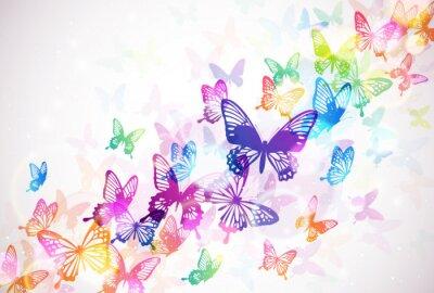 Quadro 蝶 々