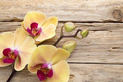 Quadro Yellow orchid.