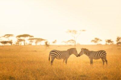 Quadro Zebra Love in the Serengeti